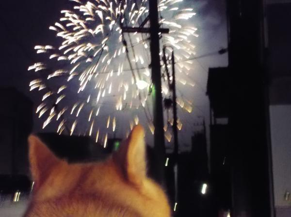 花火を見るサラ
