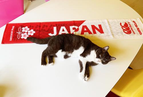 ニャンコ日本代表