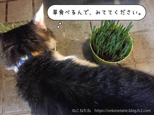 草食べるんで、みててください。