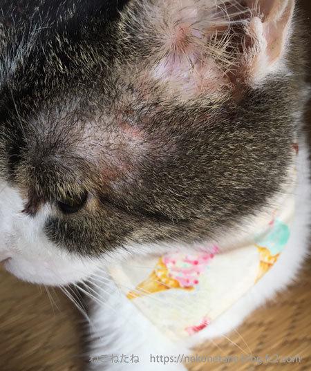 あーく氏の耳の湿疹の写真