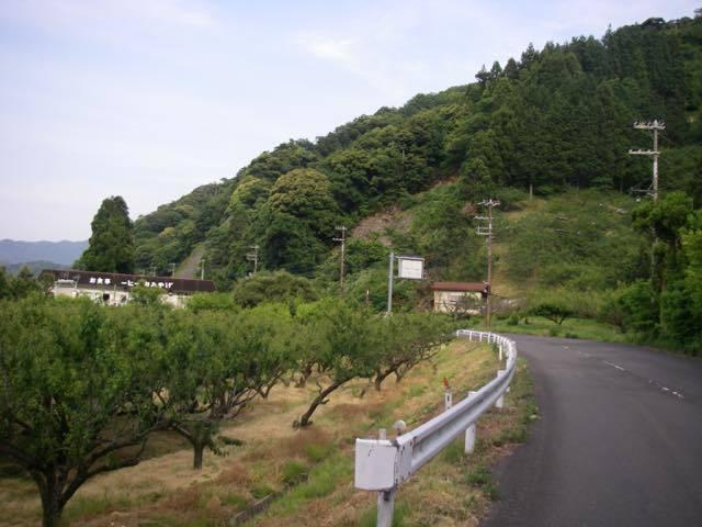 _mgsui00187.jpg