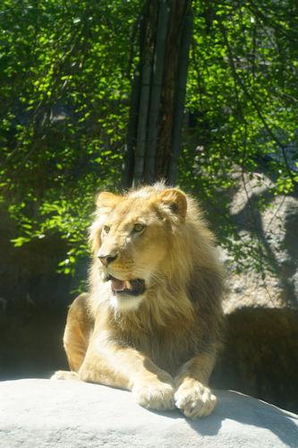 20190722旭山動物園陸上2