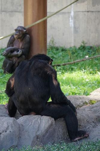 20190722旭山動物園陸上19