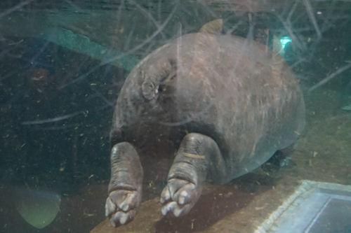 20190722旭山動物園9