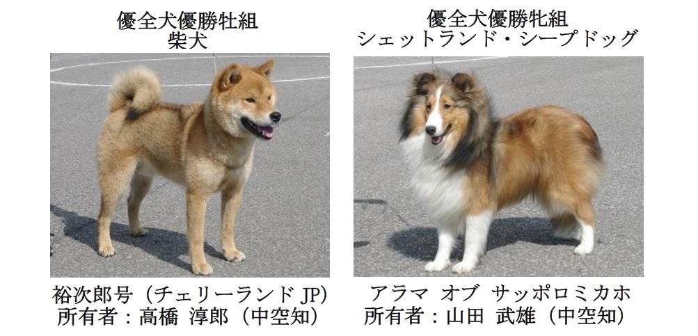 20190707中空知GCH-03-優全犬