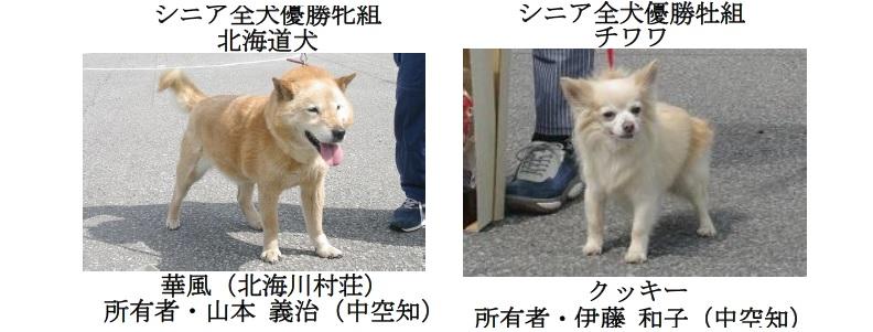 20190707中空知GCH-06-シニア全犬