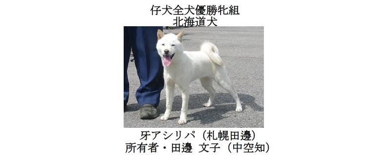 20190707中空知GCH-07-仔犬全犬