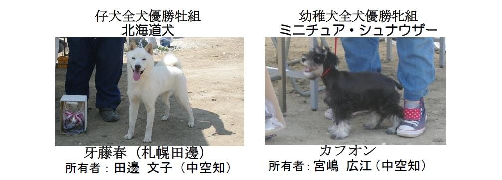 20190804札幌CH-05-仔犬幼稚犬全犬