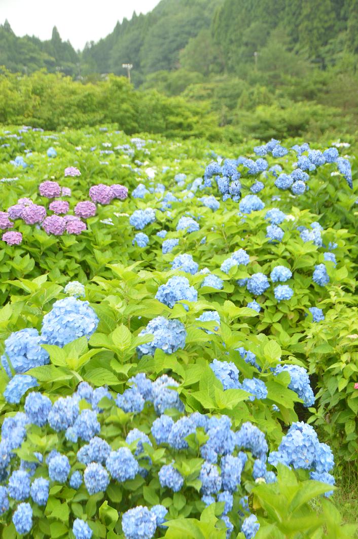 DSC_5610-2 190710 メナード青山リゾート