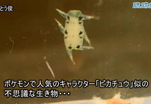 沖縄の海で「ピカチュウ」そっくりな生き物が捕獲される(動画) … 発見者「漁港の岸壁に数百匹が群れていた。新種の生物か、宇宙の生き物を発見したかと思った」