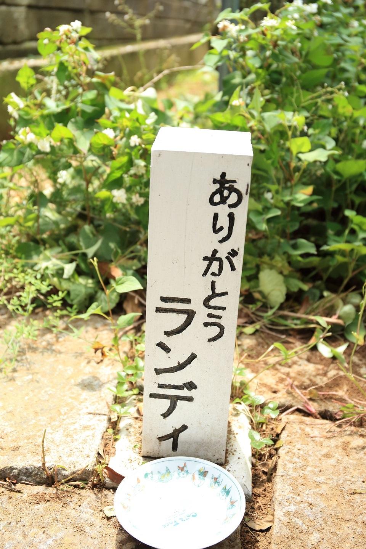 ブログ 愛犬のお墓.jpg