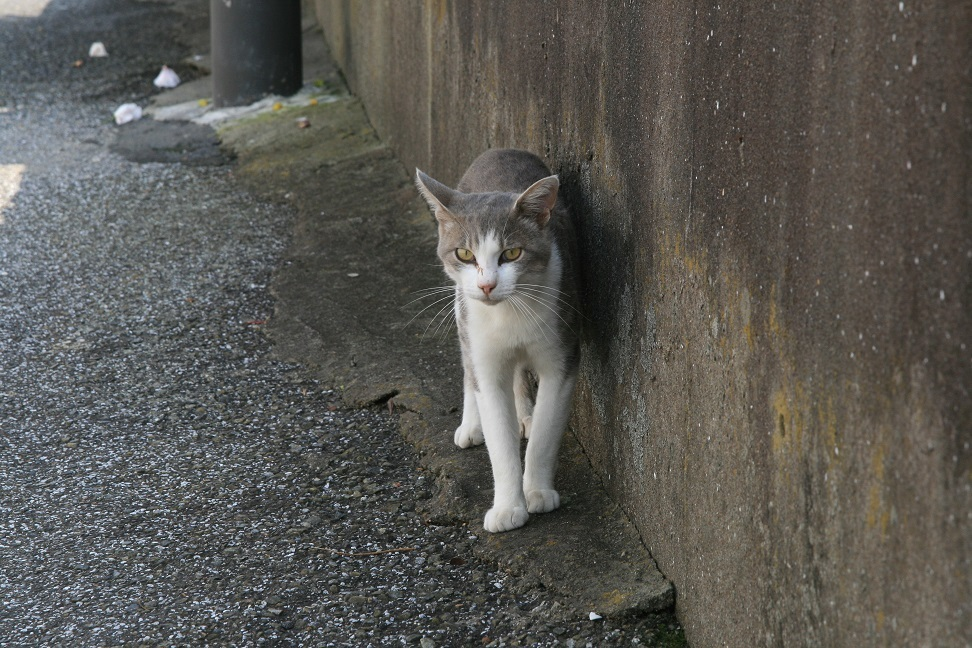 港には猫が似合う.jpg