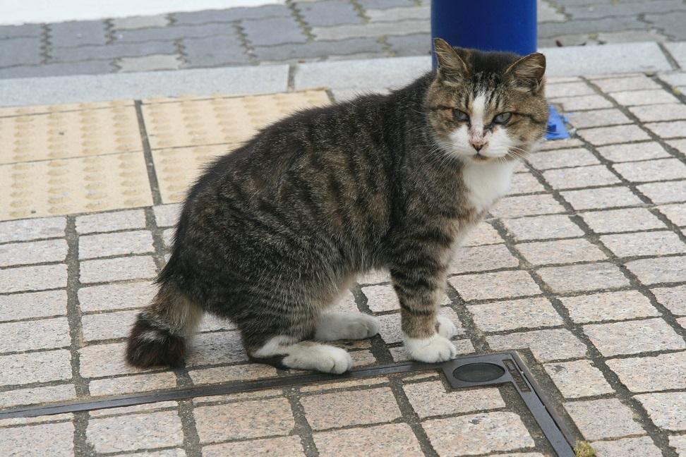 朝は猫のおはようの挨拶.jpg