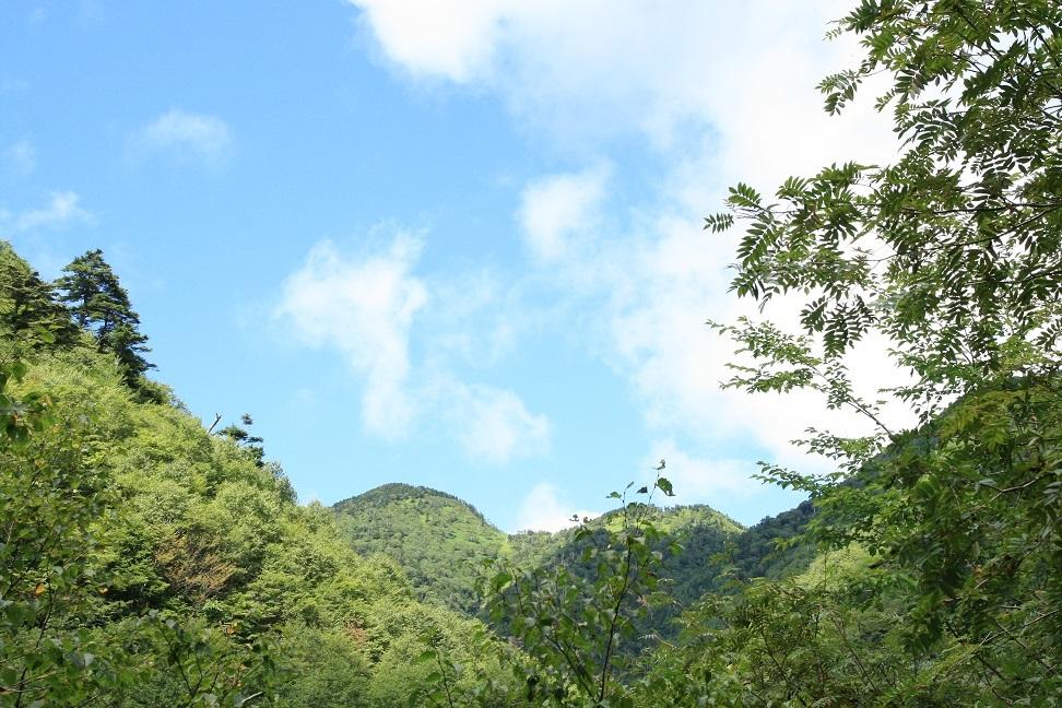 ブログ 夏の空.jpg
