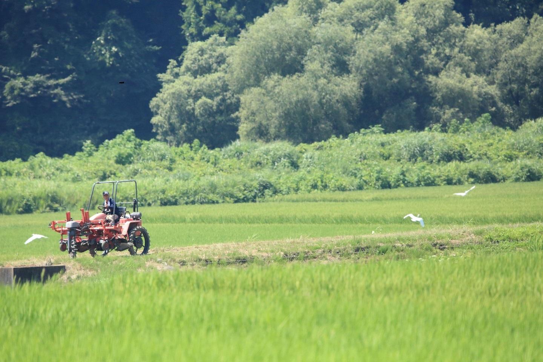 ブログ 鷺のトラクター.jpg