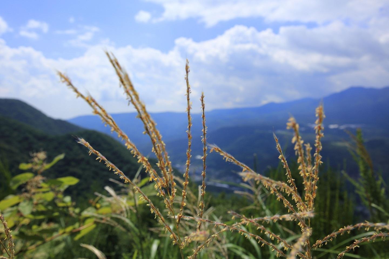 ブログ 秋の空.jpg