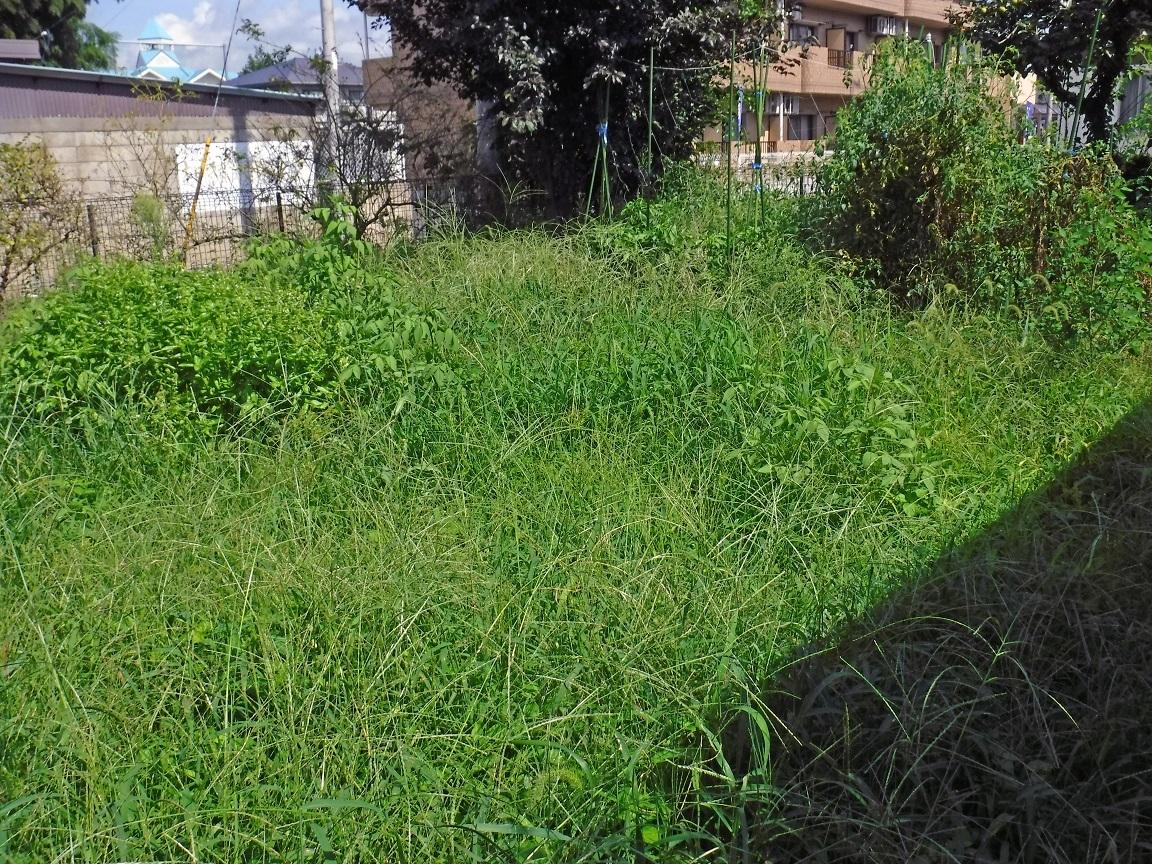 ブログ 荒れた菜園.jpg