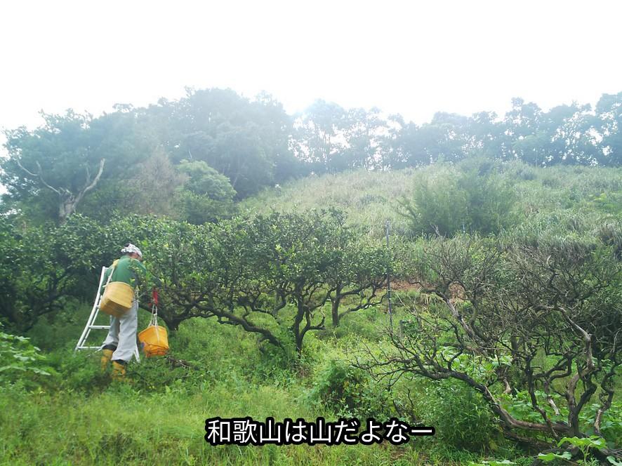 和歌山は山だ