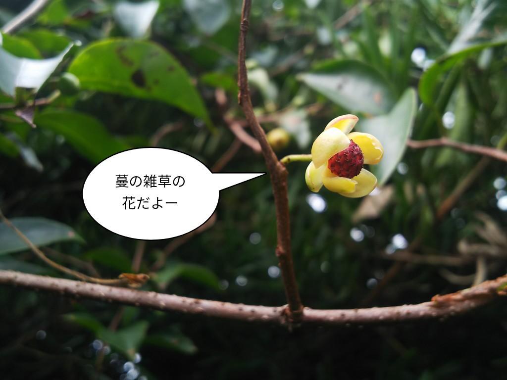 蔓の雑草の花だ