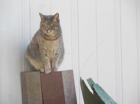 通りすがりに見かけた猫(788)