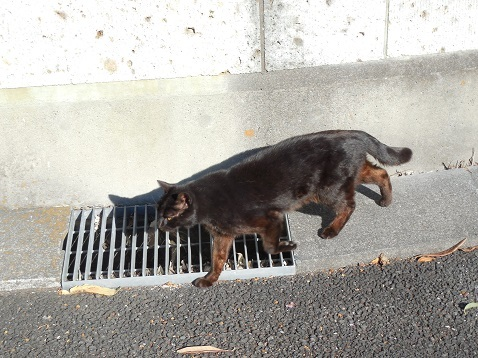 通りすがりに見かけた猫(789)