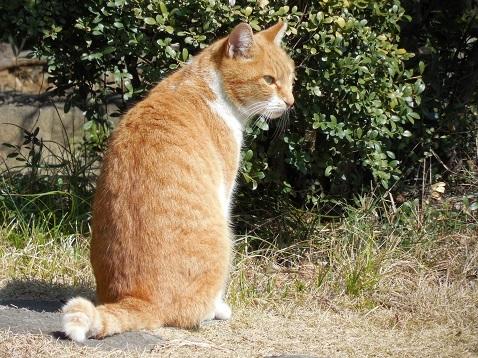 通りすがりに見かけた猫(790)