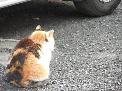 通りすがりに見かけた猫(791)