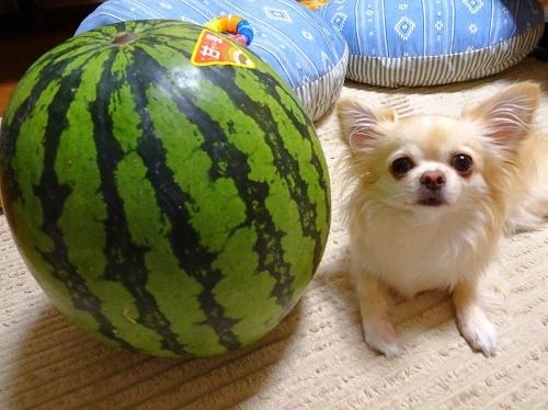 スイカと柚子