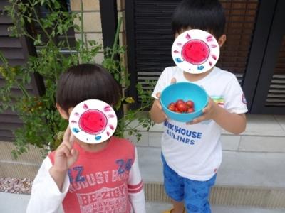 トマトの収穫②