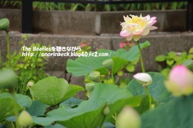 IMG_2019_07_13_9999_11.jpg