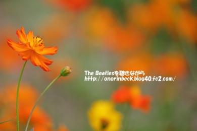 IMG_2019_08_04_9999_159.jpg