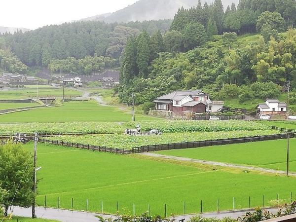 UsukiHasu_001_org.jpg