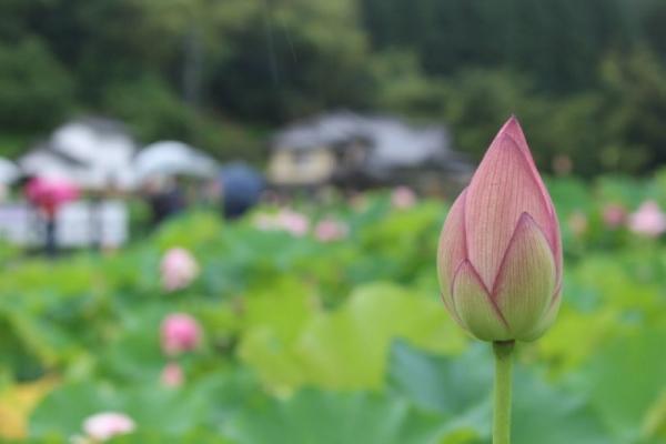 UsukiHasu_004_org.jpg