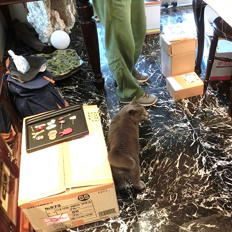 神谷麻理子 猫 ねこ ダミアン 大田区 池上 パンタレイ pantarheicraft ガラス