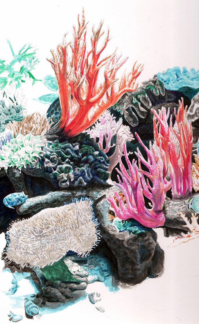 coral0729b.jpg