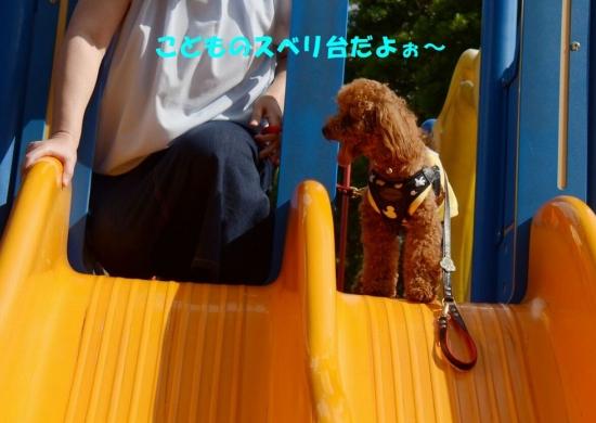 袖ヶ浦公園 20190708 004-1