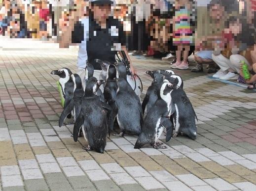 令和元年7月12日アドベンチャーワールドペンギン③