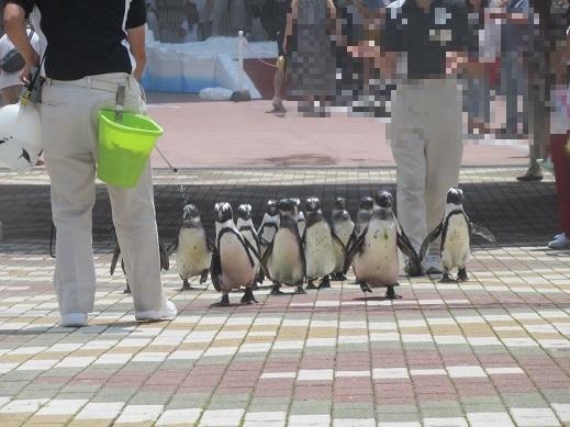 令和元年7月12日アドベンチャーワールドペンギン④