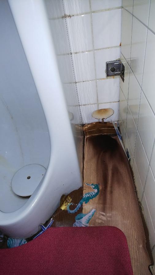 お洒落のトイレ2019