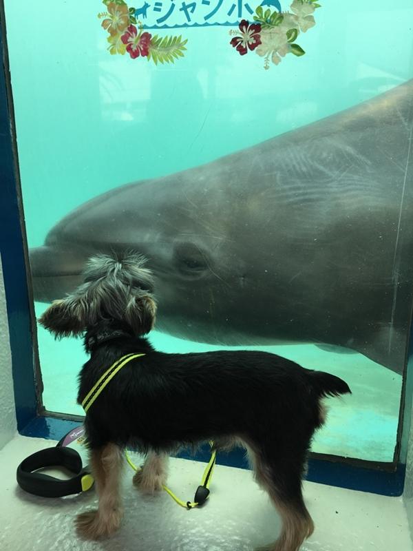 イルカのジャンボ