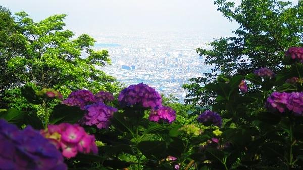 IMG_7091紫陽花園