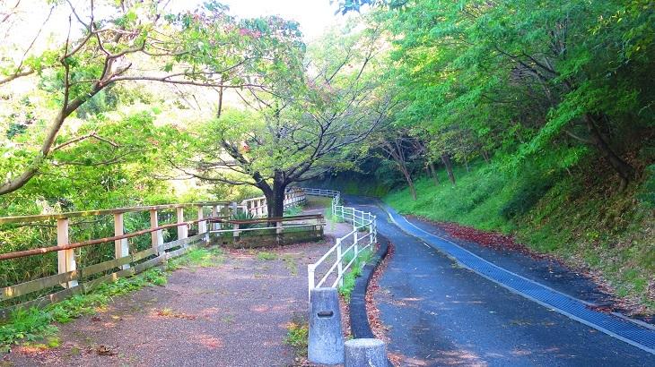 IMG_7493登山道