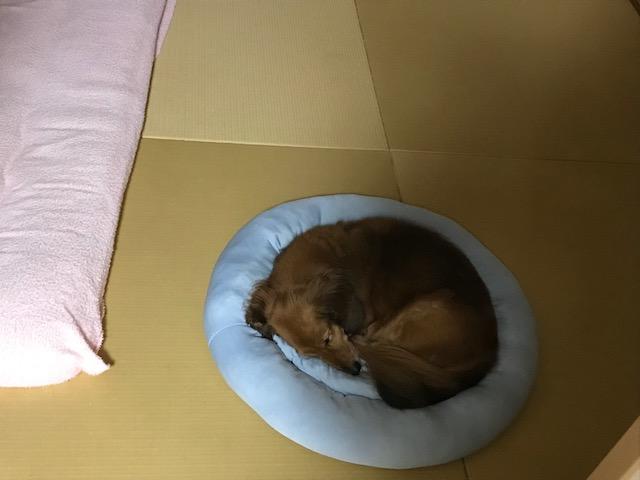 otyasumi.png