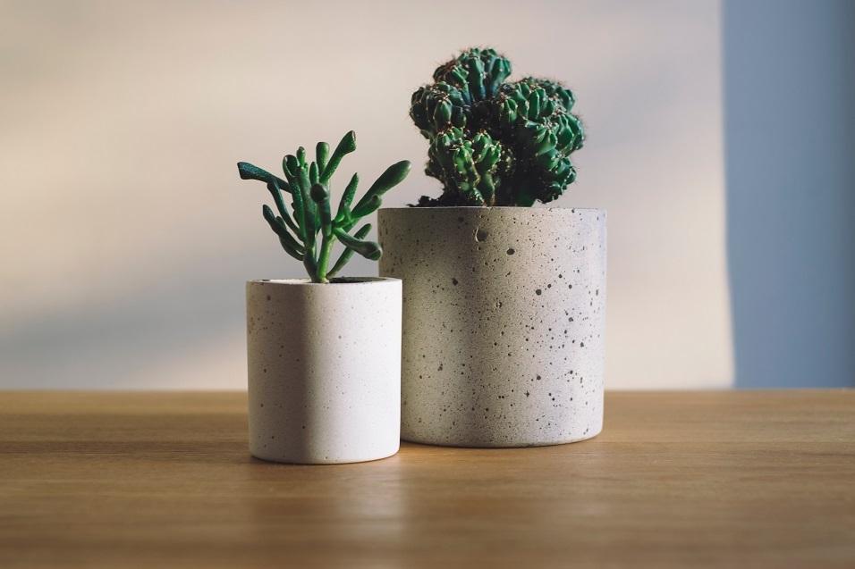 310418植物