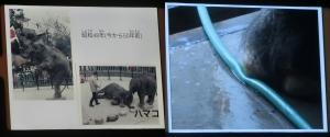 浜松動物2019-29