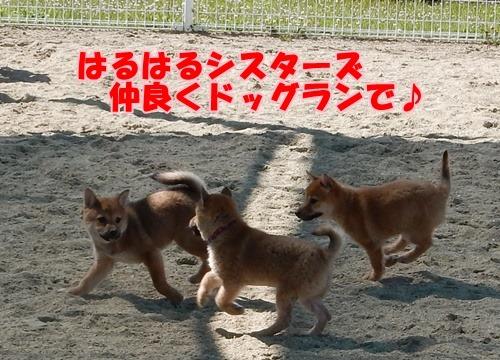 福岡県動物愛護センター:はるはるシスター001
