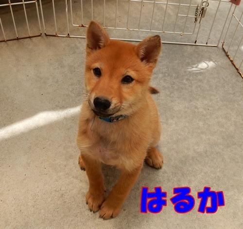 福岡県動物愛護センター:はるはるシスター002