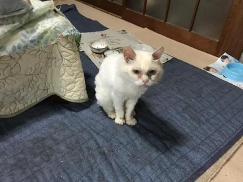 猫のゴハンがない001