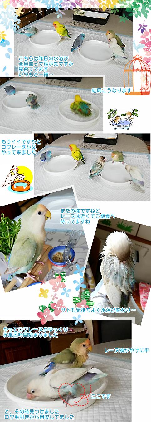 ①水浴び始め