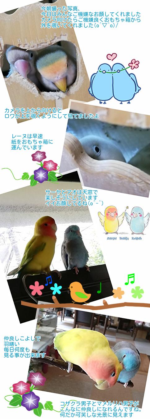 ①ご機嫌な5鳥